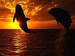 Аватар Дельфины прыгают