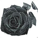 Аватар Готика, готические, темные, страшные, ужасные 008 (© ), добавлено: 03.06.2008 19:50