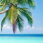 Аватар Пальма, пляж, море, отдых, лето