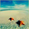 Аватар Морские звездочки на пляже загарают) (© Mirrorgirl), добавлено: 04.07.2008 13:02