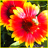 Аватар Цветы (© Lintu), добавлено: 06.06.2008 10:58