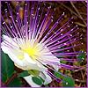 Аватар Цветок цветы (© Lintu), добавлено: 06.06.2008 10:57