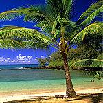 Аватар море, пляж, пальмы, лето, жара,секс (© Леона), добавлено: 09.06.2008 15:08