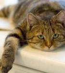 Аватар кошка лежит (© mammba), добавлено: 09.08.2008 13:42