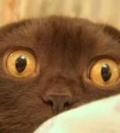 Аватар глаза (© mammba), добавлено: 09.08.2008 13:42