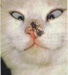 Аватар кот и муха (© mammba), добавлено: 09.08.2008 13:42