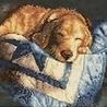 Аватар Коричневый пес спит на одеяле (© ), добавлено: 10.05.2008 22:29