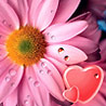 Аватар сердце 082 (© ), добавлено: 17.05.2008 14:19