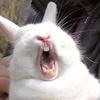 Аватар зевок)кролик зевает (© Рифеста), добавлено: 18.06.2008 18:21