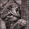 Аватар Котенок на дереве (© Mirrorgirl), добавлено: 18.06.2008 18:03