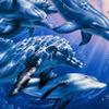 Аватар дельфины (© ), добавлено: 20.01.2008 18:37