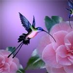 Аватар Птичка колибри) (© Mirrorgirl), добавлено: 21.07.2008 13:49