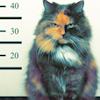 Аватар Кошка (© Mirrorgirl), добавлено: 26.01.2009 17:59