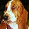Аватар грустная собака (© ), добавлено: 05.05.2008 18:12