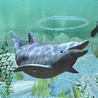 Аватар дельфин2