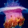 Аватар большая медуза (© ), добавлено: 05.05.2008 17:50