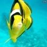 Аватар желтая рыба (© ), добавлено: 05.05.2008 17:51