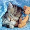Аватар спит с мишкой (© ), добавлено: 02.05.2008 14:29