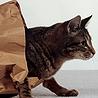 Аватар вылезает из мешка (© ), добавлено: 03.05.2008 18:30
