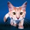 Аватар драный кот (© ), добавлено: 03.05.2008 18:32