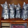 Аватар 4 кошки (© ), добавлено: 03.05.2008 18:31