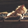 Аватар котенок и ягоды (© ), добавлено: 03.05.2008 18:32