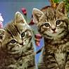 Аватар двойняшки 2 (© ), добавлено: 03.05.2008 18:33