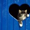 Аватар в сердце (© ), добавлено: 03.05.2008 18:35