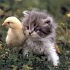 Аватар котенок и гусенок (© ), добавлено: 03.05.2008 18:34