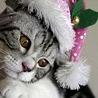 Аватар кот в шапке деда мороза