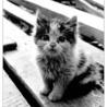 Аватар драный кот 2 (© ), добавлено: 03.05.2008 19:46