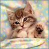 Аватар под одеялом (© ), добавлено: 03.05.2008 19:47