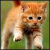 Аватар в прыжке (© ), добавлено: 03.05.2008 19:55