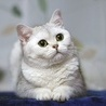 Аватар Белая кошка (© ), добавлено: 03.05.2008 19:57