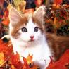 Аватар котенок и осень (© ), добавлено: 30.08.2008 10:26
