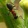 Аватар муравей (© ), добавлено: 30.04.2008 14:47