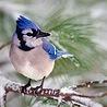 Аватар бело-синяя птица (© ), добавлено: 30.04.2008 14:53