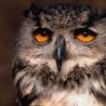 Аватар сова (© ), добавлено: 30.04.2008 14:52