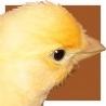 99px.ru аватар цыпленок