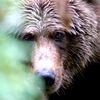 Аватар медведь (© ), добавлено: 30.04.2008 15:10