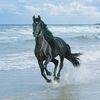Аватар черная лошадь у моря бежит (© ), добавлено: 30.04.2008 15:14
