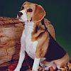 Аватар Верный пес ждет хозяина (© ), добавлено: 04.05.2008 09:27