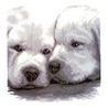 Аватар двойняшки (© ), добавлено: 04.05.2008 10:06