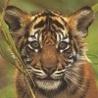 Аватар тигренок (© ), добавлено: 05.05.2008 17:35