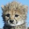 Аватар леопардик (© ), добавлено: 05.05.2008 17:39