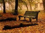 Аватар скамейка, осень (© Леона), добавлено: 30.08.2008 10:24