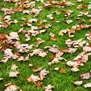 Аватар Осенние листопад
