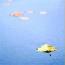 Аватар Одинокие листы