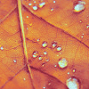 Аватар листик (© Mirrorgirl), добавлено: 22.09.2008 19:04