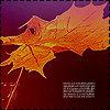 Аватар Осенний лист (© Mirrorgirl), добавлено: 03.11.2008 13:29